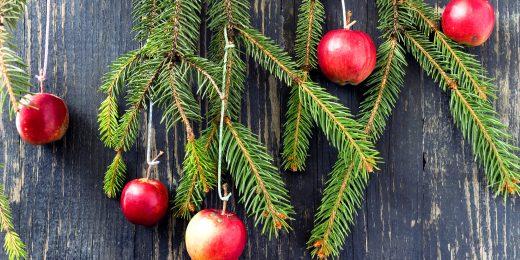 Julröda äpplen och grankvistar