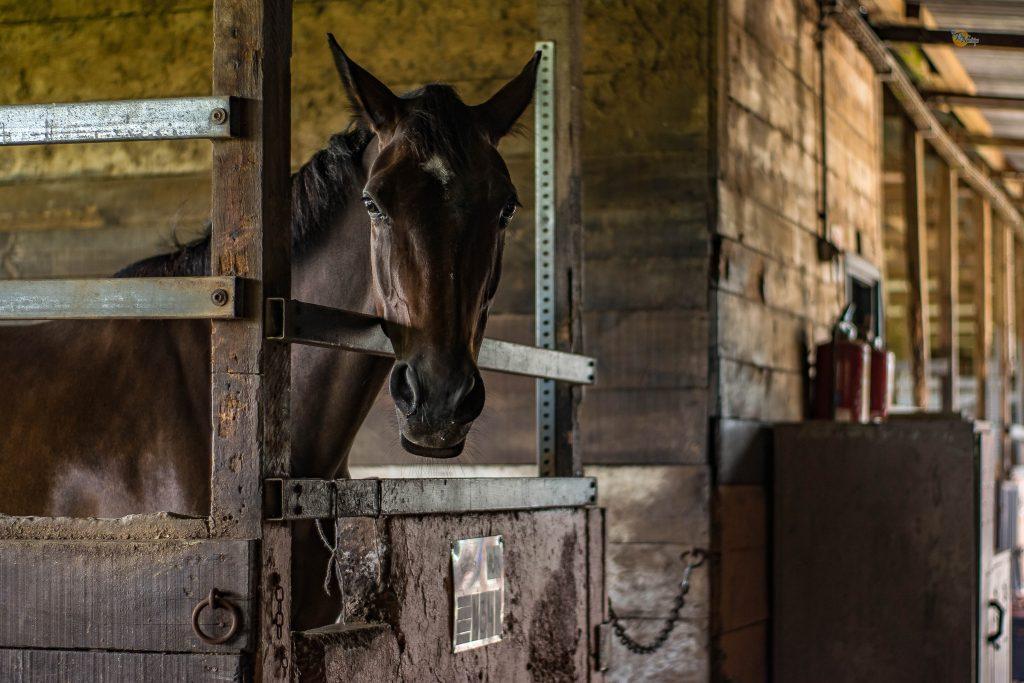 En häst i ett stall.